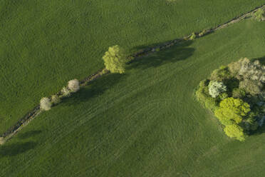 Abstract aerial view of trees in meadow, springtime, Franconia, Bavaria, Germany - RUEF02230