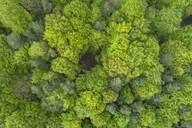 Aerial view of forest with fresh vital leaves directly from above in early springtime, Franconia, Bavaria, Germany - RUEF02236