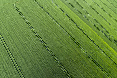 Aerial View of abstract green agricultural field, springtime, Franconia, Bavaria, Germany - RUEF02239
