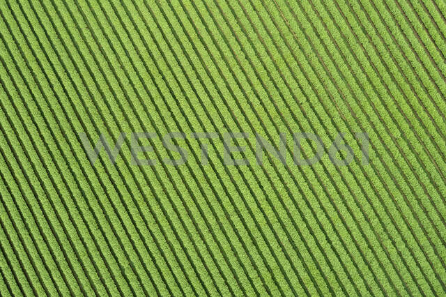 Abstract aerial view of ribes agricultural field, Franconia, Bavaria, Germany - RUEF02248 - Martin Rügner/Westend61