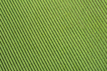 Abstract aerial view of ribes agricultural field, Franconia, Bavaria, Germany - RUEF02248