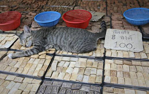 Cat sleeping on trinkets in marketplace - MINF12179