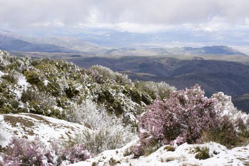 Snow at Way of St. James, near Cruz de Ferro, Spain - LMJF00098