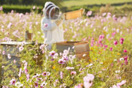 Beekeeper checking honey on beehive frame in field full of flowers - JUIF01543