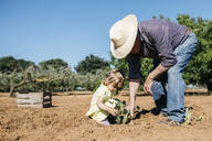 Grandfather and granddaughter planting vegetables in the field - JRFF03394
