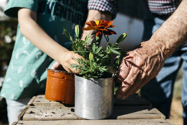 Grandfather and grandson planting a flower in a metal flowerpot - JRFF03403