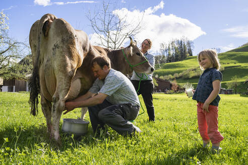 Farmer with his family milking a cow on pasture - FBAF00846