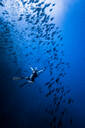 Diver swimming with school of fish, Revillagigedo Islands, Socorro, Baja California, Mexico - ISF21973