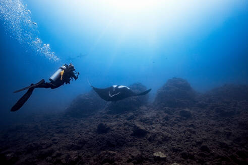 Female diver filming Giant Oceanic manta ray, two scalloped hammerheads in background, Revillagigedo Islands, Socorro, Baja California, Mexico - ISF21979