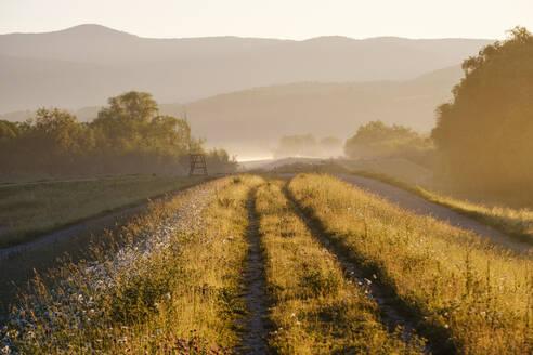 Weg auf Damm bei Sonnenaufgang, Naturschutzgebiet Isarmündung, bei Plattling, Niederbayern, Bayern, Deutschland - SIEF08725