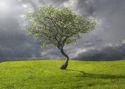 Tree growing in rural landscape - BLEF07978