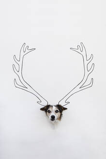 Portrait of mongrel with drawn deer antler on white ground - PSTF00429