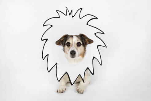 Portrait of mongrel with drawn lion's mane in front of white background - PSTF00462