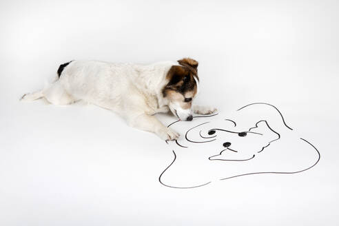Mongrel watching drawn mirror image lying on white ground - PSTF00468