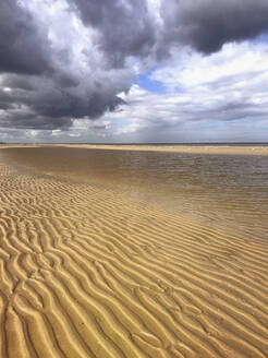 Belgium, Flanders, North Sea Coast, low tide on the beach with storm cloudes, sea gulls - GWF06130