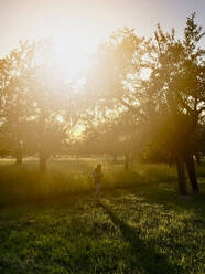 Apple trees and girl in backlight - LVF08148