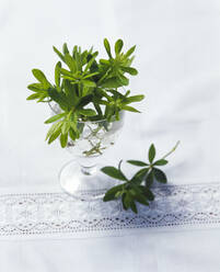 Twigs of sweet-scented bedstraw in glass on table - PPXF00215