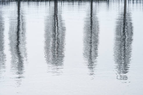 Germany, Baden-Wurttemberg, Bare poplar trees reflected in Lake Constance - SHF02193