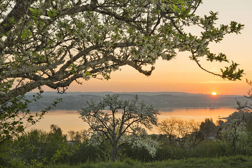 Germany, Baden-Wurttemberg, Lake Constance and trees at sunrise - SHF02199