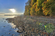 Germany, Baden-Wurttemberg, Autumn trees by Lake Constance - SHF02205