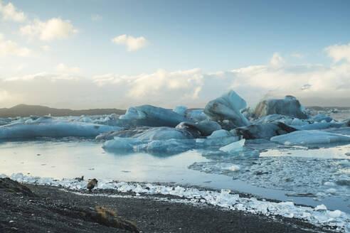 Iceland, South Iceland,Jokulsarlon glacial lake - TAMF01735