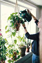 Woman watering plant hanging from window at home - MASF13236