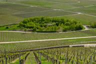 Scenic view of Iphofer Julius-Echter-Berg vineyard - LBF02642