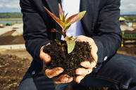 Close up man cupping plant sapling in dirt - FSIF04192