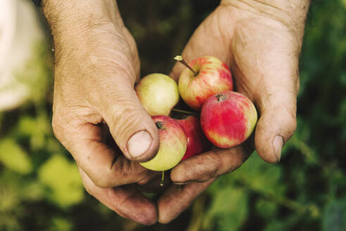 Caucasian farmer holding fruit - BLEF10657
