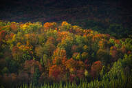 Autumn trees growing in rural landscape - BLEF10901