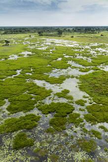 Plants growing in still river - BLEF11816