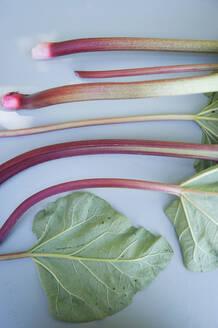 Rhubarb - GISF00437