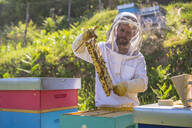 Beekeeper checking frame with honeybees - MGIF00590