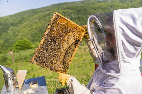 Beekeeper checking frame with honeybees - MGIF00593