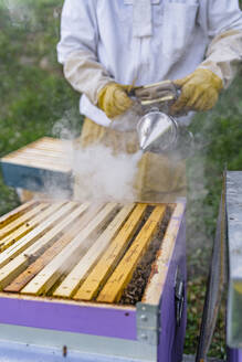 Beekeeper with honeycombs and smoker - MGIF00599