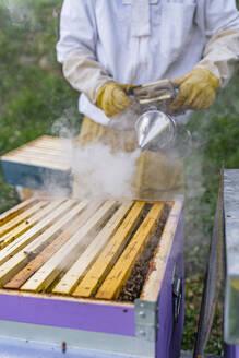 Italy, Tuscany, Arezzo, Beekeeper - MGIF00599