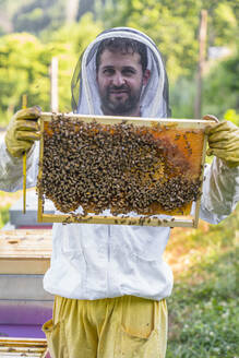 Beekeeper checking frame with honeybees - MGIF00602