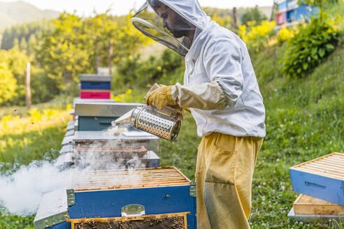 Beekeeper with honeycombs and smoker - MGIF00605