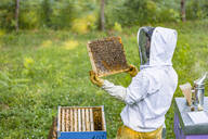 Beekeeper checking frame with honeybees - MGIF00620