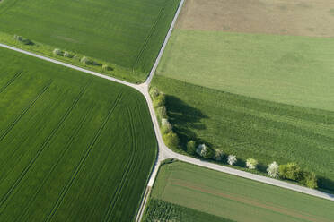Aerial view of treelined road with intesection through agricultural fields, Franconia, Bavaria, Germany - RUEF02279