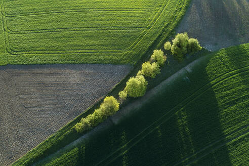Aerial view of trees between agricultural fields with shadows, Franconia, Bavaria, Germany - RUEF02282