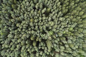 Aerial view of road through forest, springtime, Steigerwald, Franconia, Bavaria, Germany - RUEF02285