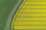 Abstract aerial view of rural road through agricultural fields with oilseed rape field and green wheat field, Franconia, Bavaria, Germany - RUEF02291