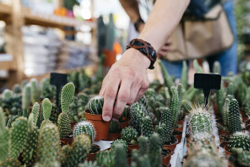 Close-up of a worker in a garden center picking up a cactus - JRFF03495