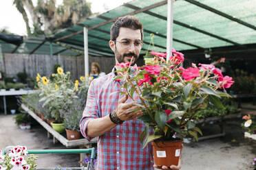 Customer of a garden center choosing a flower - JRFF03507