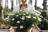 Female worker in a garden center holding a daisy plant - JRFF03534