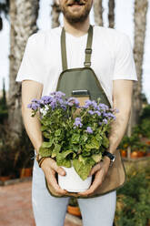 Close-up of a worker in a garden center holding a lilac plant - JRFF03537