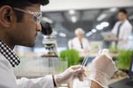 Male environmental scientist placing stem in test tube - HEROF37364