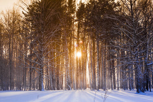 Sun shining through trees in snowy forest - BLEF13401