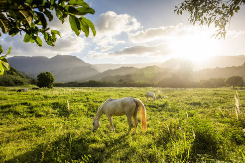 Sunbeams shining over horses grazing in rural field - BLEF13416